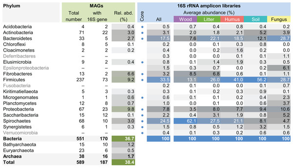 Phylum-level representation of MAGs among the bacterial gut microbiota of higher termites.