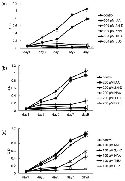 Growth of coenobial algae Desmodesmuskomarekii in the presence of several auxins and inhibitor of auxin biosynthesis and auxin transport.