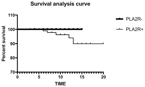 The log-rank test showed no significant difference in renal survival between the two groups.