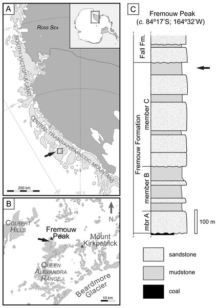 """Geographic occurrence and stratigraphic position of the Fremouw Peak permineralized peat; modified from Fig. 1 in """"Habit and ecology of the petriellales, an unusual group of seed plants from the Triassic of Gondwana"""" by Bomfleur et al. (2014)©2014 by The University of Chicago. All rights reserved."""