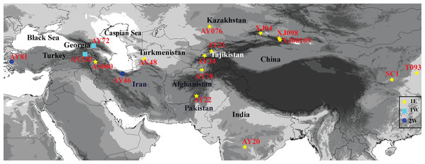Geographical distribution of 17 Aegilops tauschii accessions from western Turkey to eastern China.