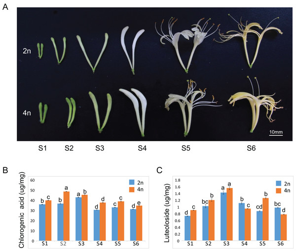 Plant tissues of L. japonica used for de novo transcriptome assembly.