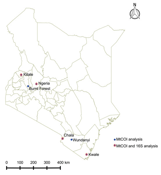 Sites from which Spodoptera frugiperda larvae were collected in Kenya.