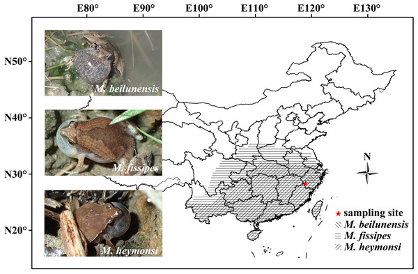 The geographical distribution of the three Microhyla species in China.