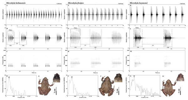 Sample recordings of the advertisement call of the three Microhyla species from East China.