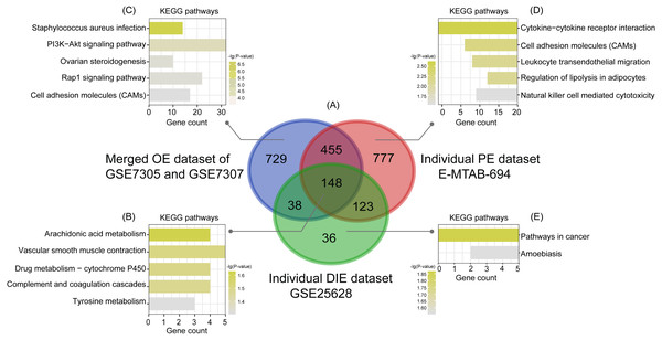 Intersection analysis and KEGG pathway enrichment analysis of common and specific DEGs among OE, PE, and DIE.