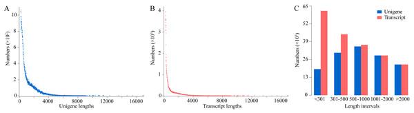 Analysis of transcript and unigene lengths.