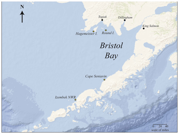 Bristol Bay, Alaska study area showing Pacific walrus sample collection sites (starred).