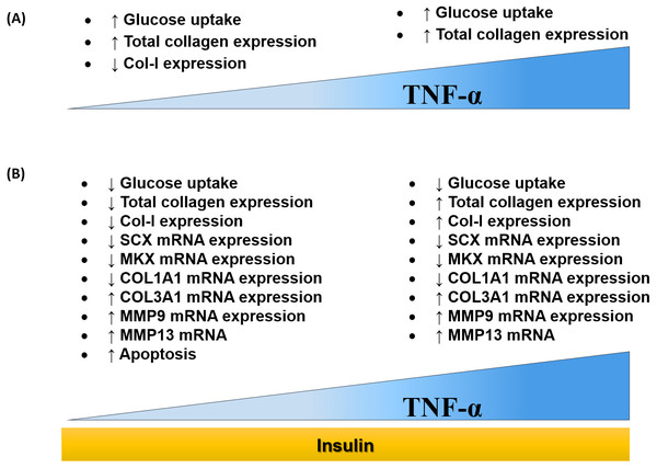 Dose-dependent effects of TNF-α on hTeno glucose uptake, total collagen expression, COL-I expression, candidate tenogenic marker genes and ECM metabolism-related genes, with and without insulin stimulation.