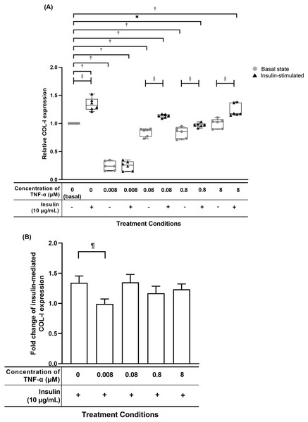 TNF-α suppressed insulin-mediated Type I collagen (COL-I) expression when treated with lesser than 8 µM TNF-α; 0.008 µM TNF-α group shows a significantly reduction in the fold change of insulin-mediated COL-I expression levels.