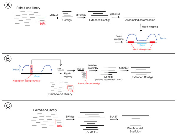 Workflow detailing three approaches for assembling the mitochondrial genomes of Columbicola lice.