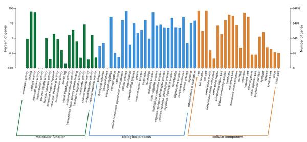 GO categories of P. lobata unigenes.