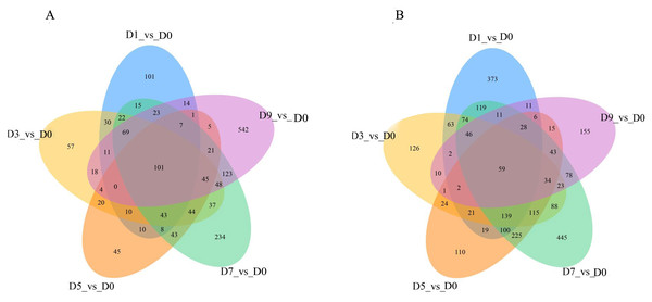 The overlap of the DEGs are represented by Venn diagram (A) up-regulated genes and (B) down-regulated genes.