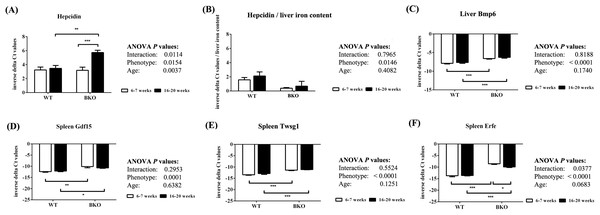 The expression of hepcidin and upstream regulators of hepcidin in wild type and thalassemic mice.
