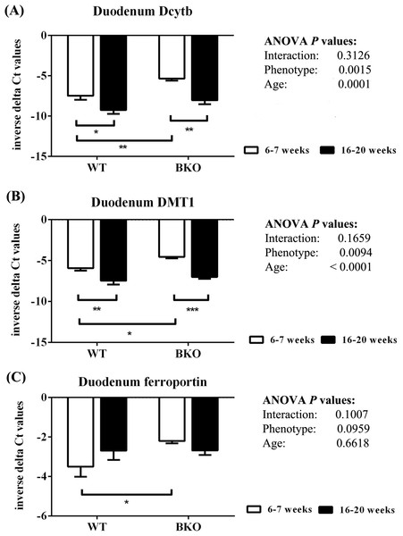 The expression of major iron transport machineries in the duodenum of wild type and thalassemic mice.
