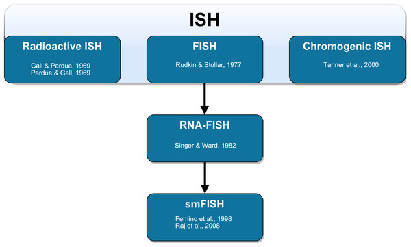 Schematic representation of the technical development of fluorescent in situ hybridization (FISH).