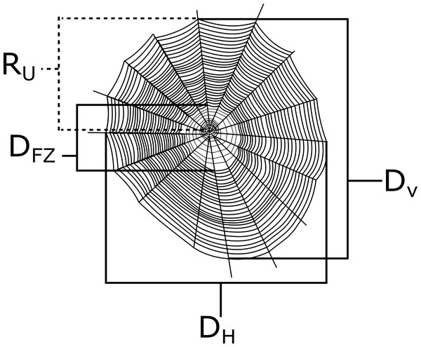A depiction of a generic orb web with example measurements that were taken in this study.