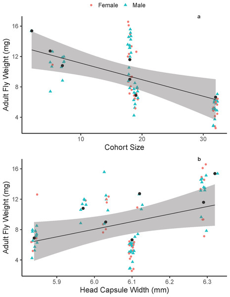Adult Drino rhoeo weight as a function of competitive larval environment (cohort size) and host quality.