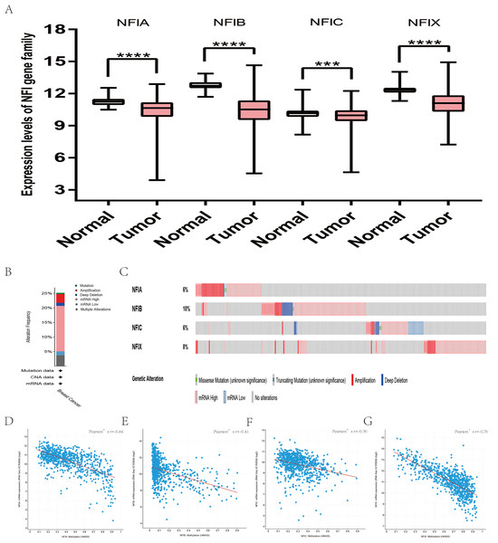 Transcription levels, genomic analysis of the NFIs and regression analysis between the mRNA expression of the NFIs and its corresponding methylation in breast cancer (A–G).