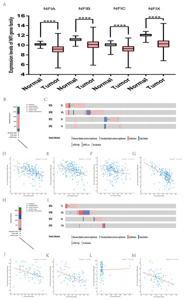 Transcription levels, genomic analysis of the NFIs and regression analysis between the mRNA expression of the NFIs and its corresponding methylation in lung cancer (A–M).