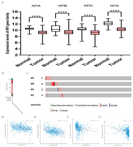 Transcription levels, genomic analysis of the NFIs and regression analysis between the mRNA expression of the NFIs and its corresponding methylation in head-neck cancer (A–G).