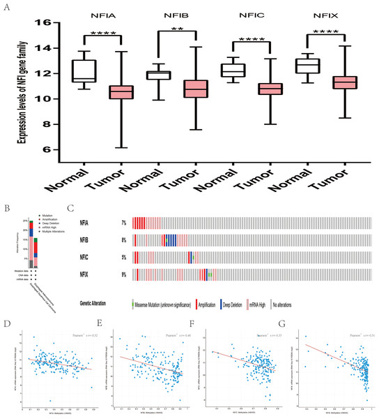Transcription levels, genomic analysis of the NFIs and regression analysis between the mRNA expression of the NFIs and its corresponding methylation in esophageal cancer (A–G).