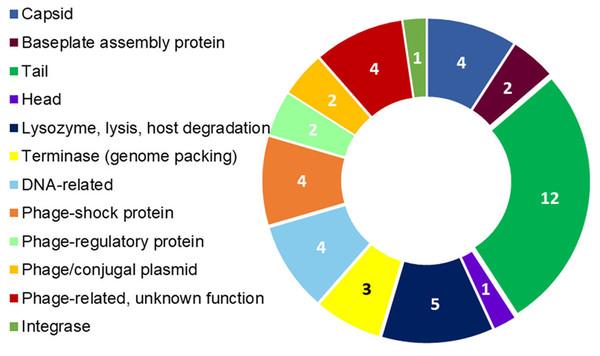 R. nectarea strain 8N4T prophage genes.