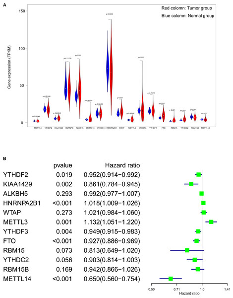 Screening of differentially expressed and prognostic related m6A related genes.