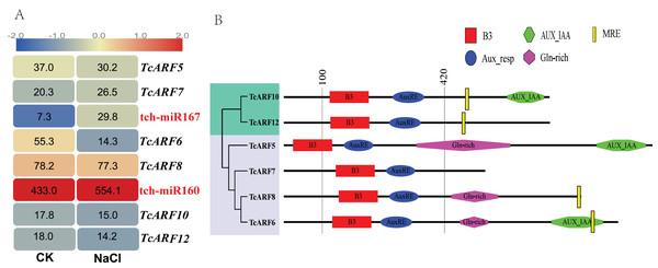 ARFs targeted by miRNAs in Tamarix chinensis.