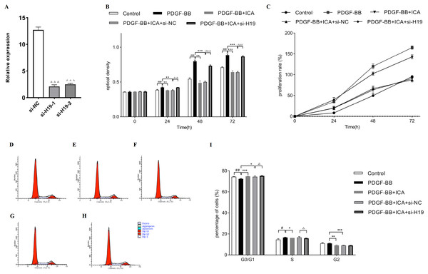 Down-expression of H19 reversed ICA-induced cell proliferation in PDGF-BB-stimulated RPE cells.