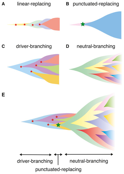 Illustrating the scenarios in cancer evolution.