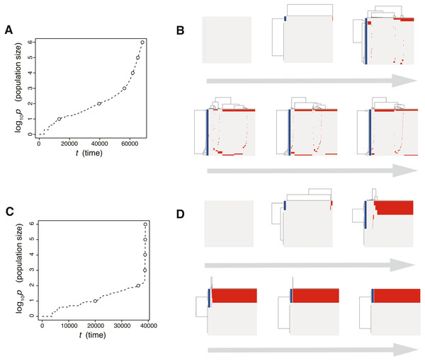 Time-course snapshots of simulations based on the driver model.