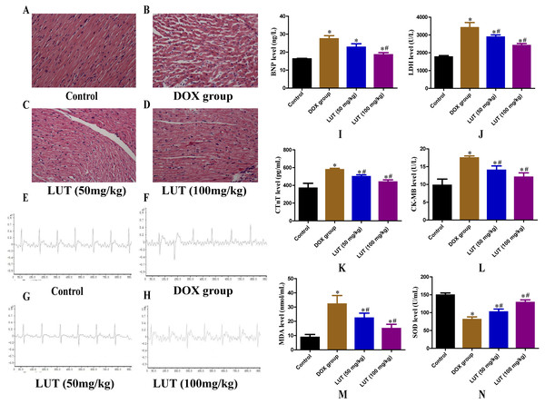 Effects of LUT on the histopathological features, electrocardiogram, serum levels of cardiac injury, and oxidative stress mediators in the heart tissue of DOX-induced cardiotoxicity model rats.