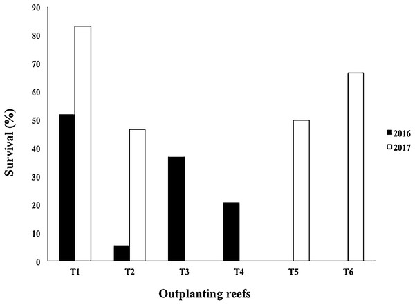 Survival percentage of Acropora cervicornis colonies in four outplanting sites (T1, T2, T3, T4) existing after Hurricane Matthew (2016), and four outplanting sites (T1, T2, T5, T6) existing after Hurricanes Irma & Maria (2017).