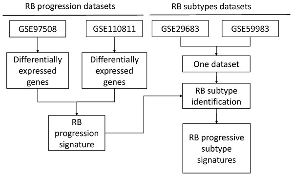 A heatmap of differentially expressed genes in GSE110811.