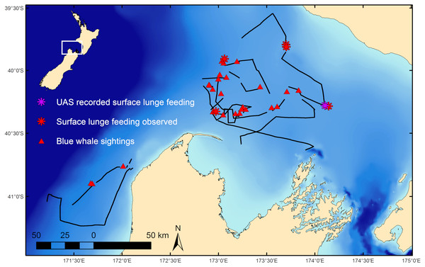 Blue whale survey tracklines and sighting locations.