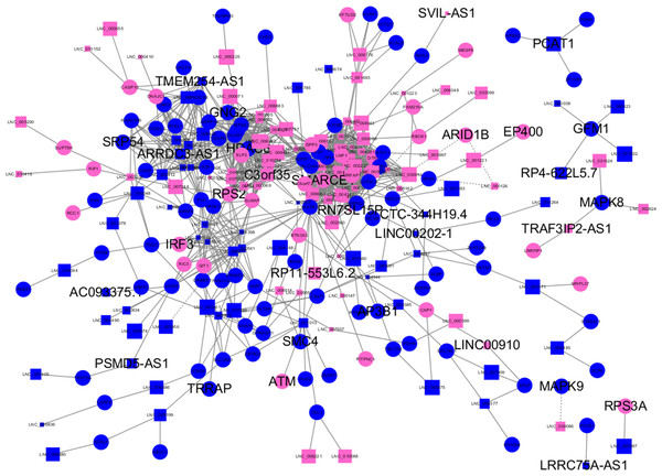 Long non-coding RNA (lncRNA)-mRNA co-expression network in elite controllers (ECs) and HIV-positive infected patients (HPs).