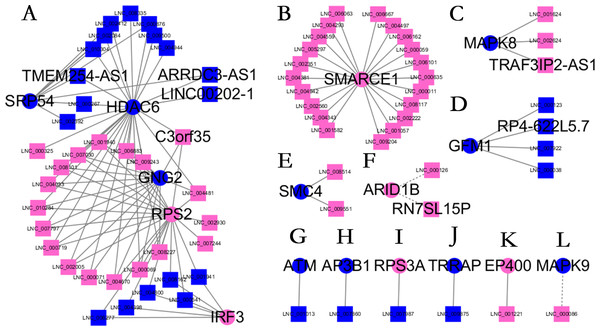 Long non-coding RNA (lncRNA)-Hub mRNA co-expression network in elite controllers (ECs) and HIV-positive infected patients (HPs).