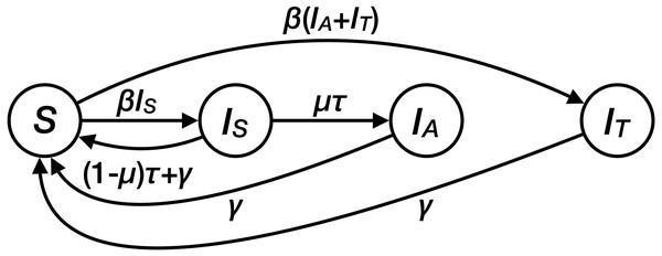 Structure of the transmission model for Mycoplasma genitalium.
