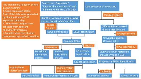 Flow diagram of the study.