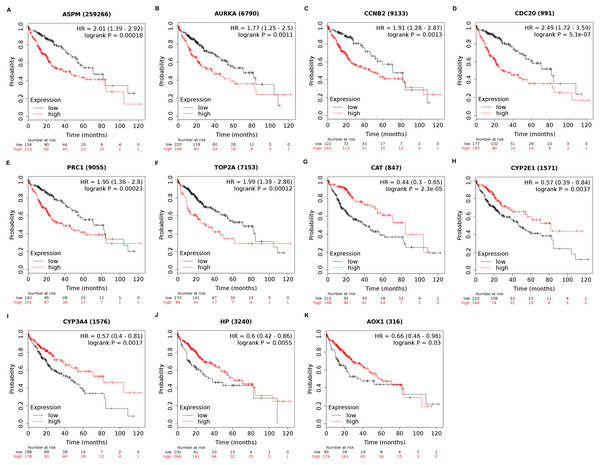 Overall survival analysis of 11 key genes in HCC patients.