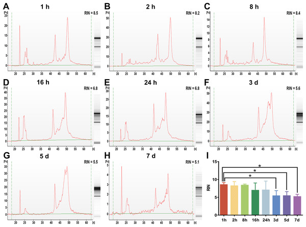 The assessment of whole blood RNA integrity under different preservation durations (from 1 h to 7 days) at 4 °C.