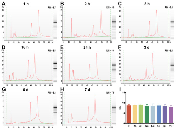The assessment of leukocyte RNA integrity under different preservation durations (from 1 h to 7 days) at 4 °C.