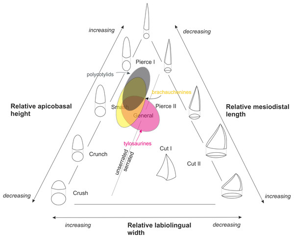 Massare's (1987) ternary graph, as modified by Hornung & Reich (2015), showing the association of tooth crown morphologies and function.