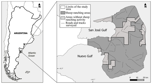 Location of Península Valdés and distribution of the survey transects inside the study area.