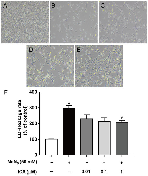 Effects of ICA on the LDH leakage rate of NaN3-injured PC12 cells.