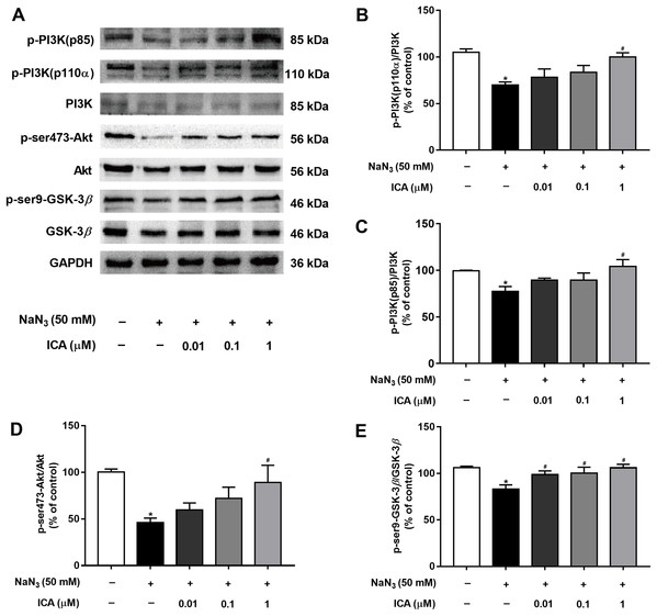 Effect of ICA on the PI3K/Akt/GSK-3β signaling pathway in NaN3-injured PC12 cells.
