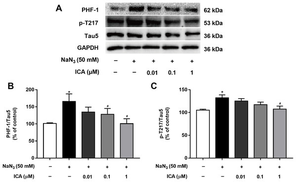 Effect of ICA on the phosphorylation level of Tau in NaN3-injured PC12 cells.