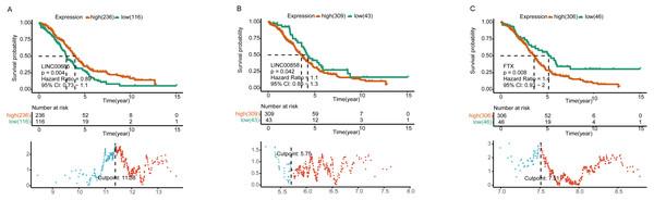 Survival analysis of lncRNAs in ceRNA network.