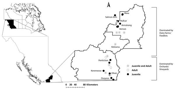 Map of the study area (Okanagan-Similkameen region) with sampling sites in British Columbia (BC), Canada.